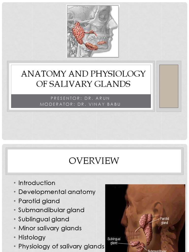 Download Salivary Glands - DocShare.tips