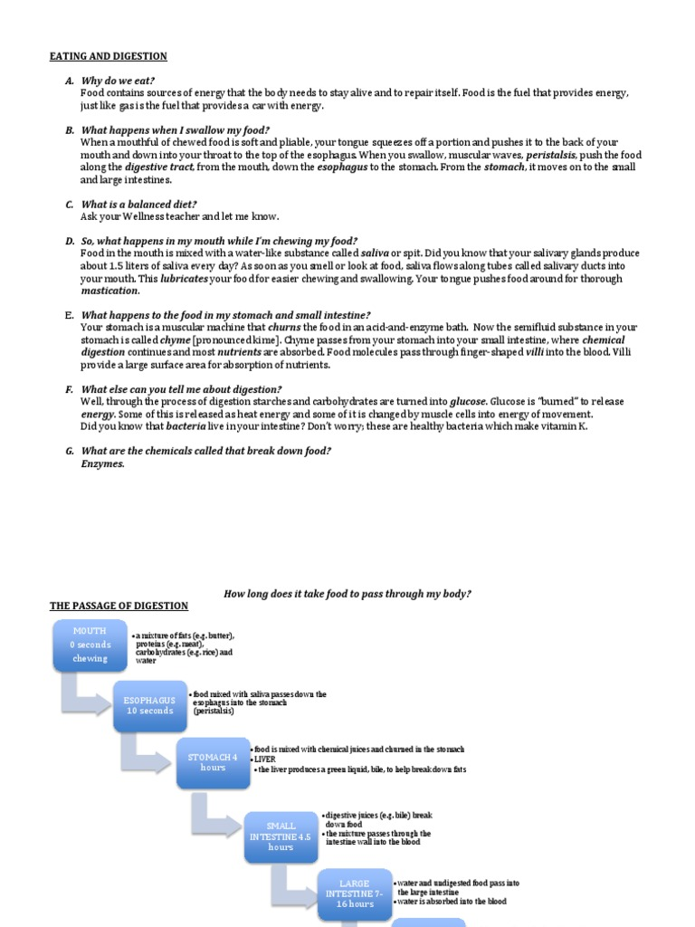 Digestive System Flow Chart Docshare