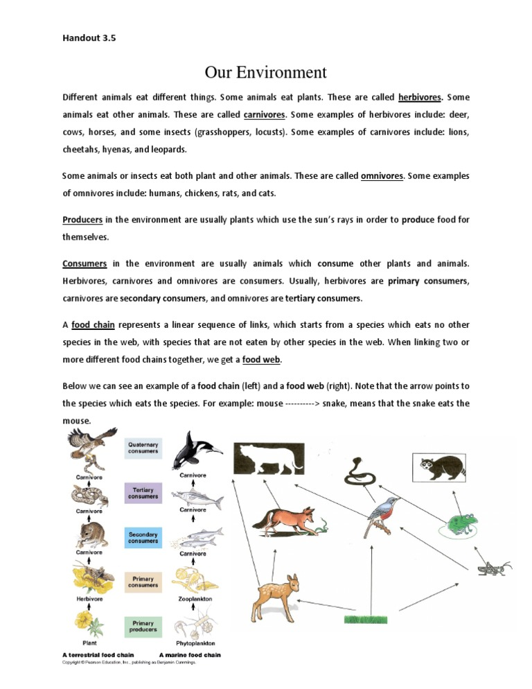 H 35 Notes Food Chain Docshare