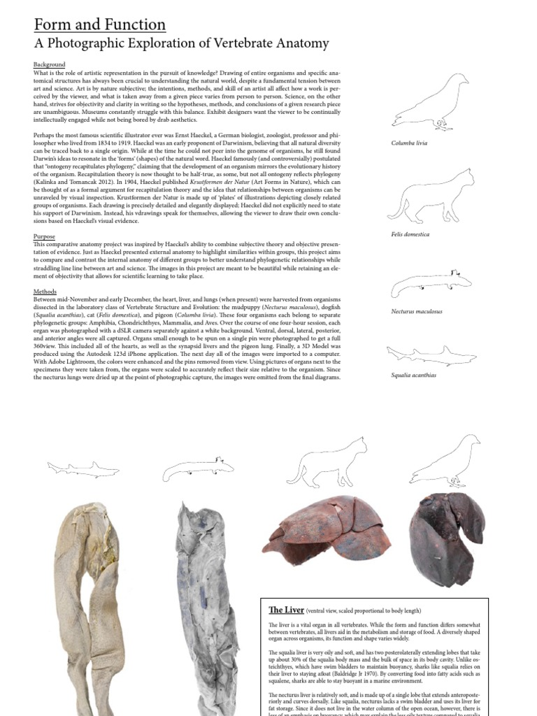Form and Function: An Exploration of Vertebrate Anatomy - DocShare.tips