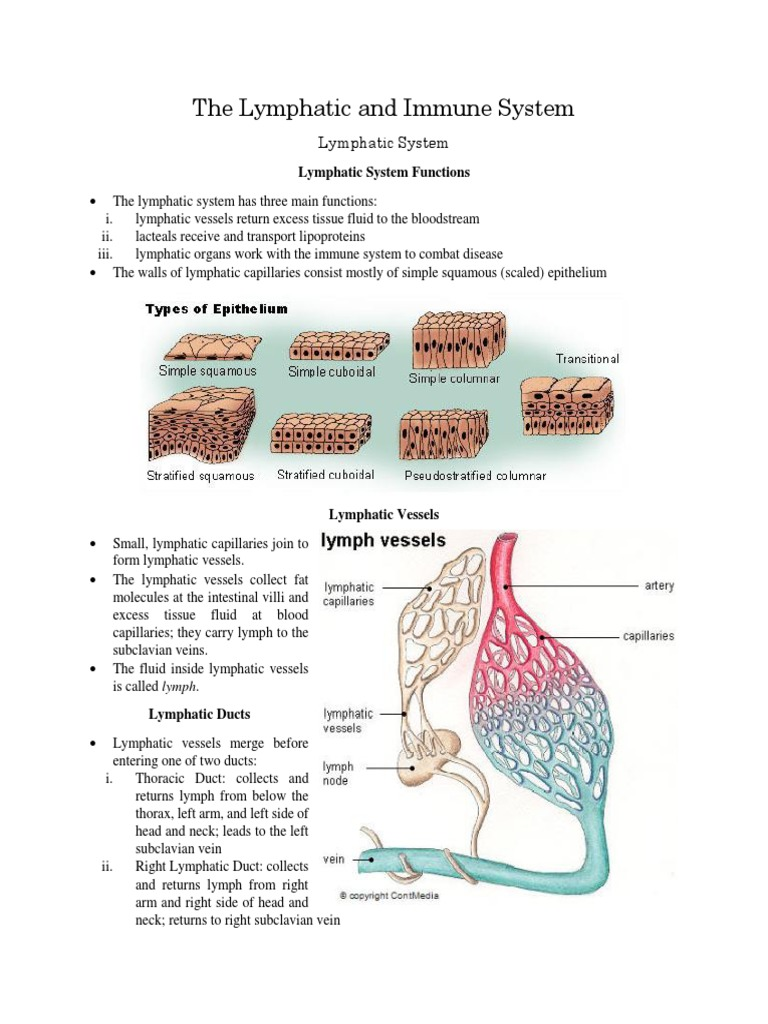 Download Bio 405 Week 3 Individual Assignment Cardiovascular And