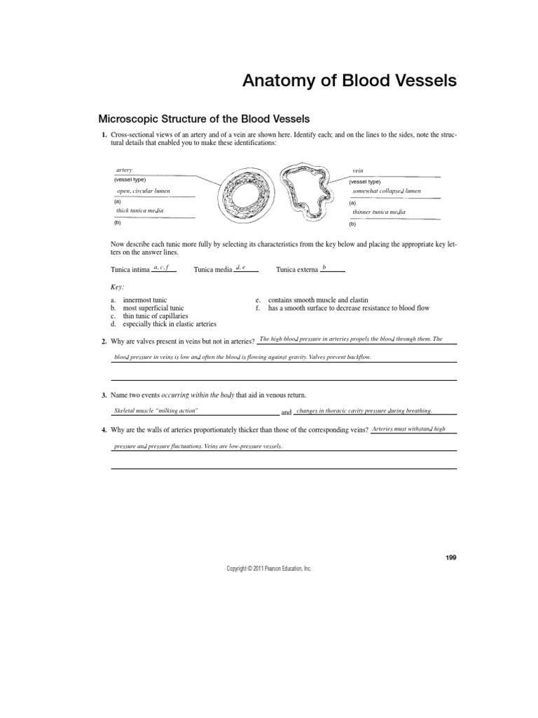 Blood Vessels Review Sheet - DocShare.tips