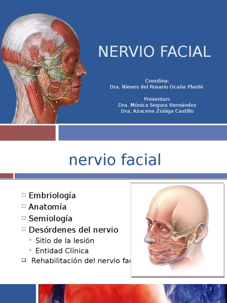 Nervio Facial PPT Final (1) - DocShare.tips