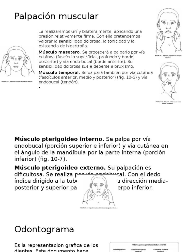 palpación de los musculos de la masticación y odontograma - DocShare ...