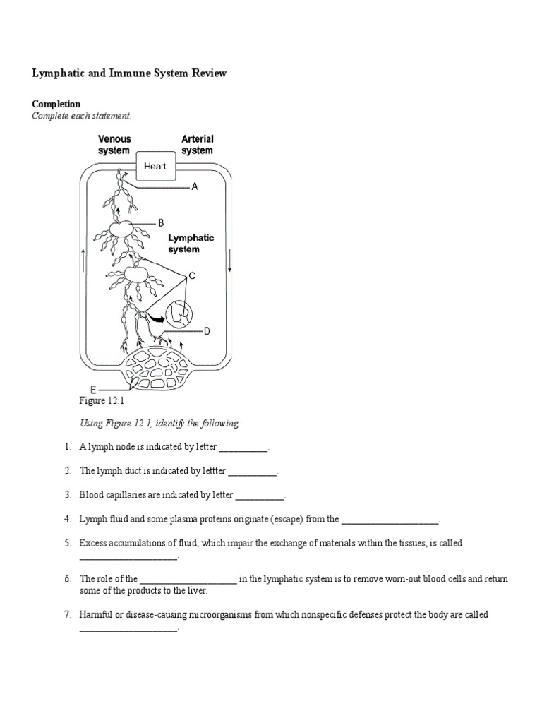 Lymphatic And Immune System Review Docshare