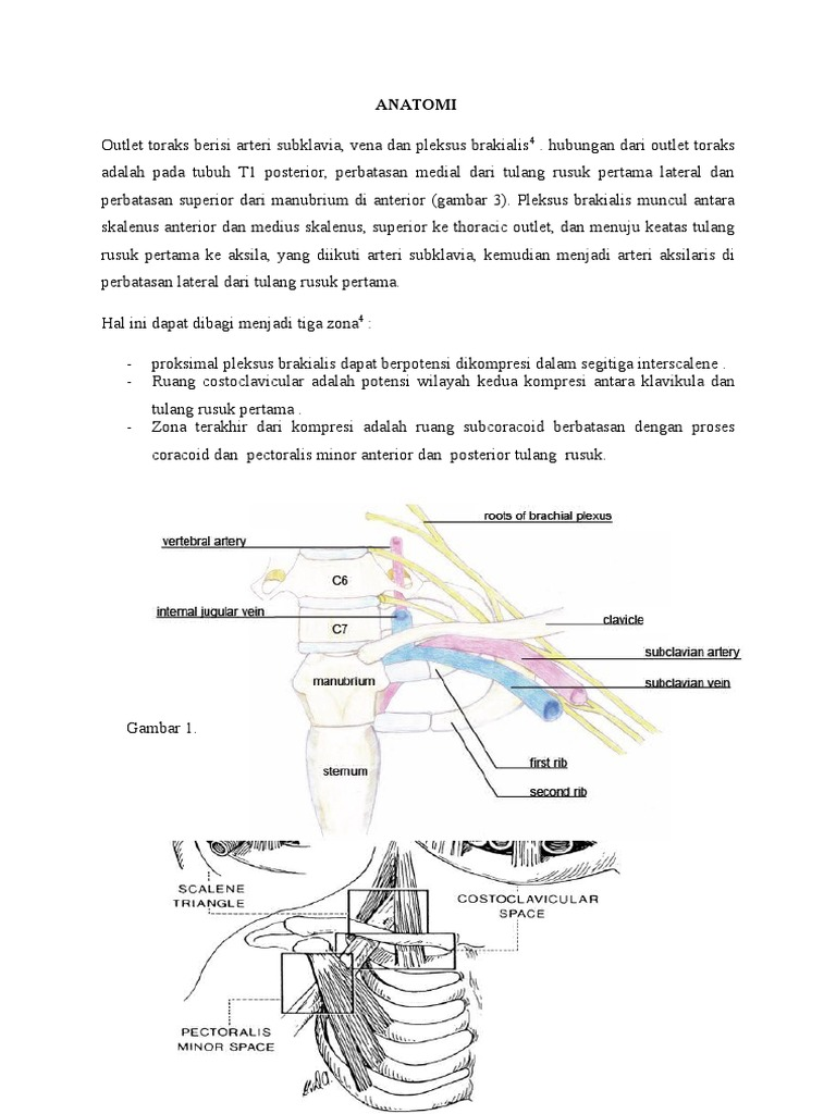 Download Anatomi Sinus Paranasal Docshare