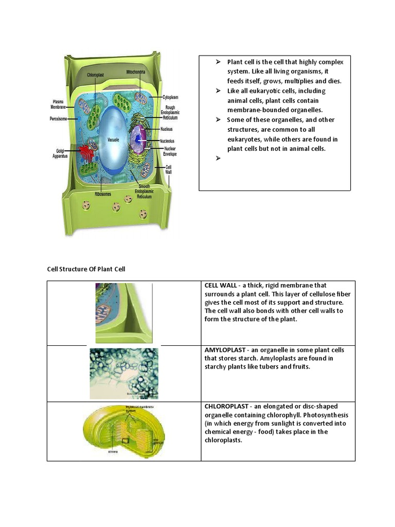 Download 2 Ultra Structure Of An Animal Cell A Plant