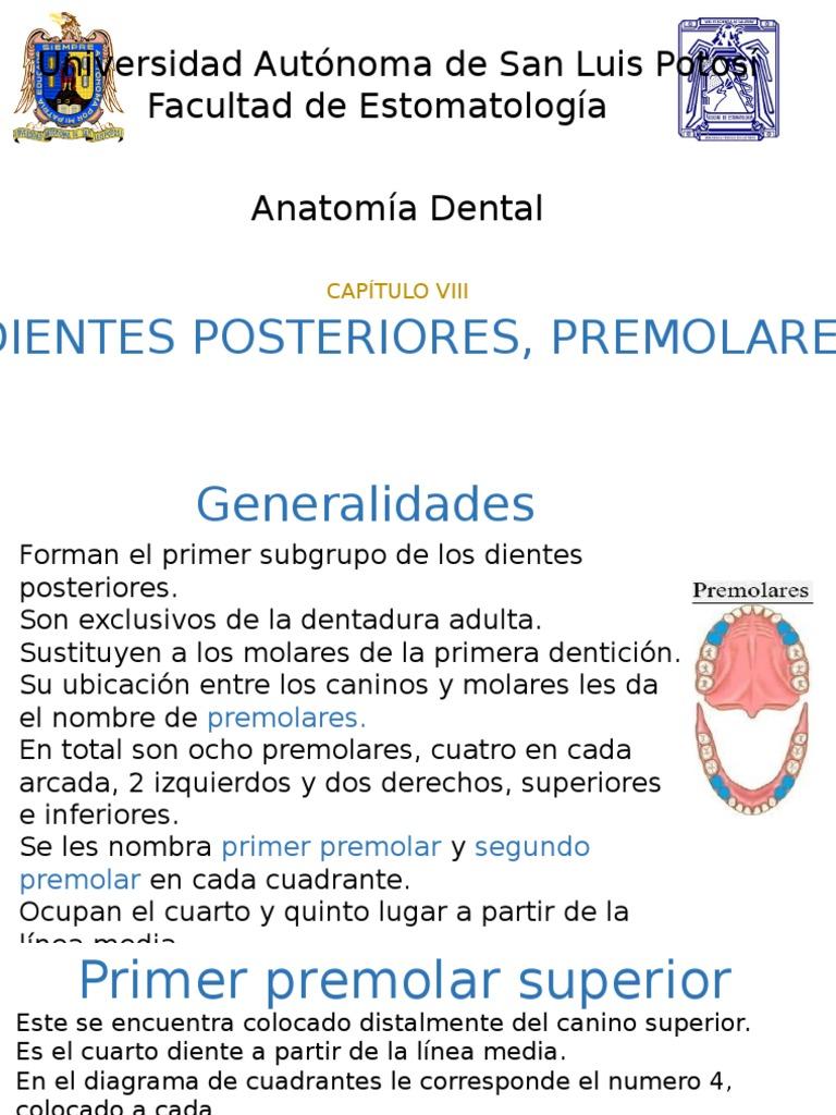 Dental - DocShare.tips